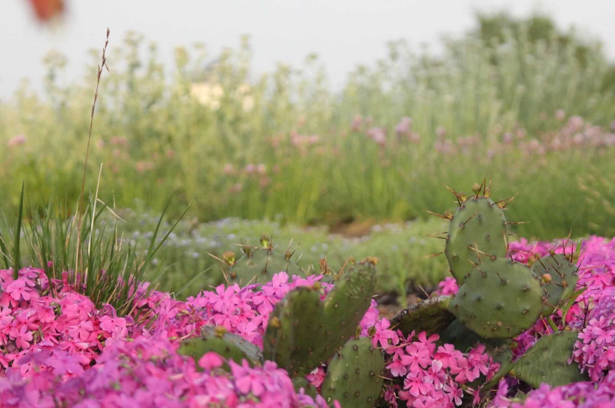 Fort Reno Green Roof Plants