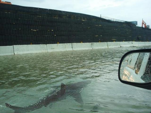Fake photo of shark swimming on Houston highway